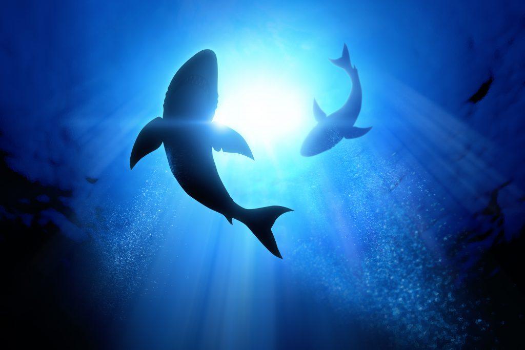 Shark Tank with SwedenBio